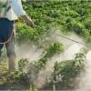 Cat de mult influenteaza pesticidele femeile insarcinate?