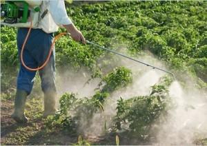 Pesticidele in sarcina